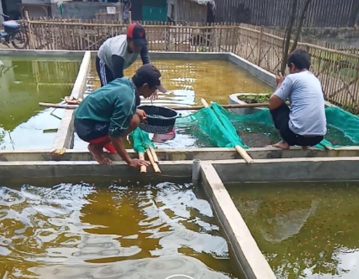 Budidaya Ikan Hias Karawang Mulai Dilirik Luar Daerah